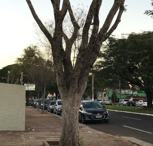 Imam recomenda atenção com poda de árvores em Dourados