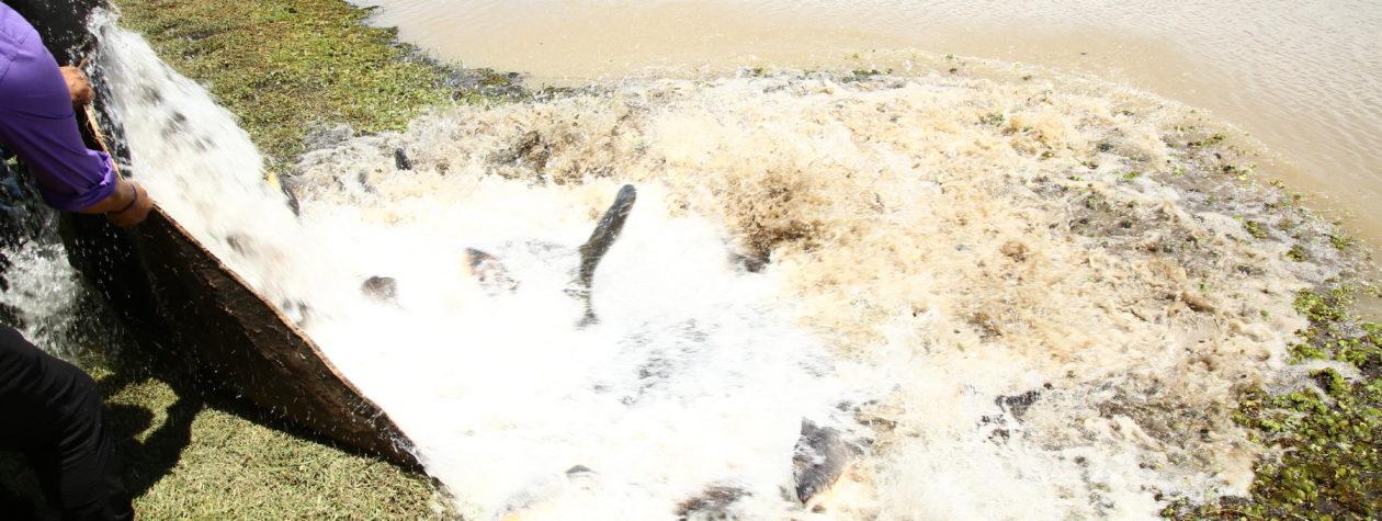 Prefeitura faz soltura de peixes nos lagos do Rego D'Água