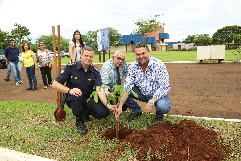 Como nas escolas, mudas de ipês são plantadas em área das futuras instalações da Semed
