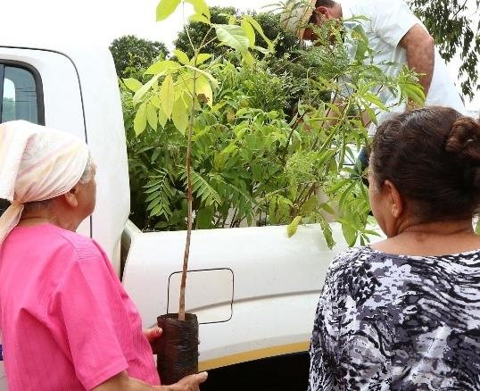 Programação da Semana da Árvore segue em  Dourados e sábado mobilização é na Praça