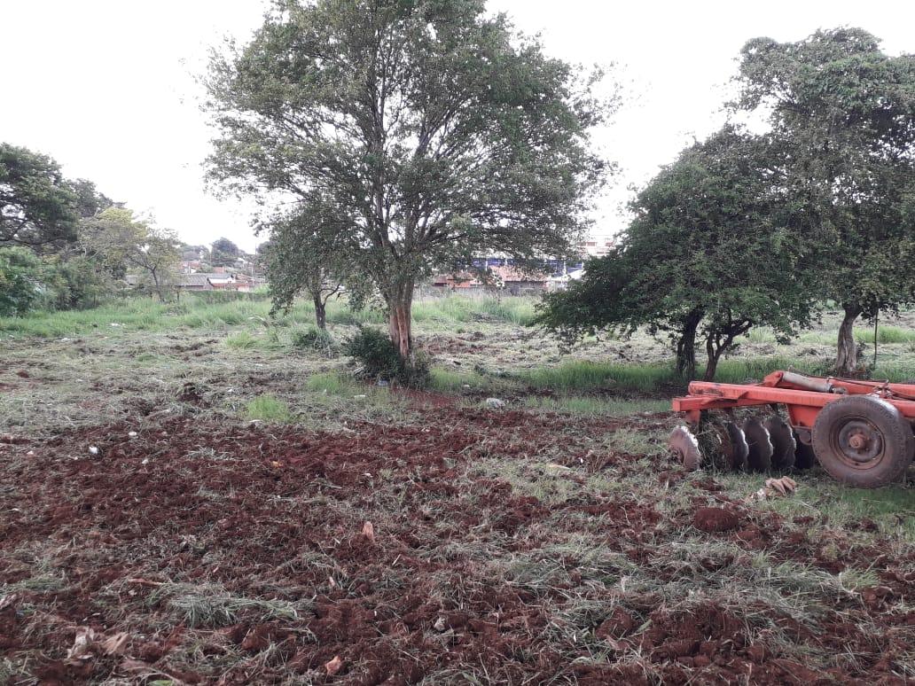 Prefeitura de Dourados fará o maior  plantio de árvores da história num único dia