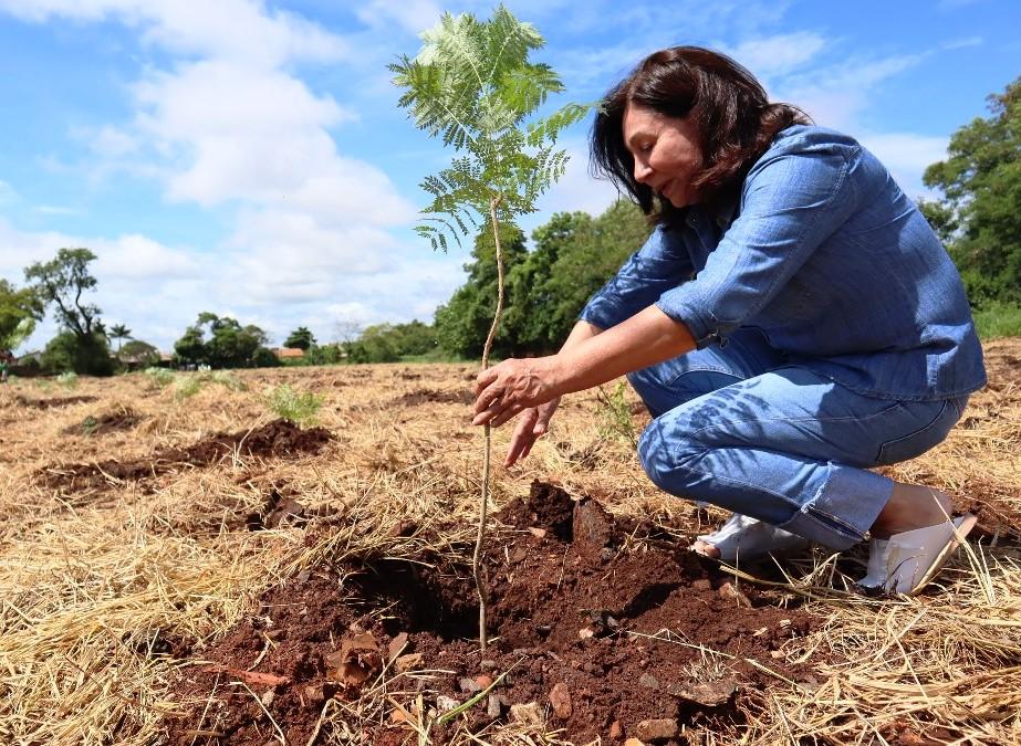 Plantio de 1700 árvores garante a preservação  de área de proteção ambiental em Dourados