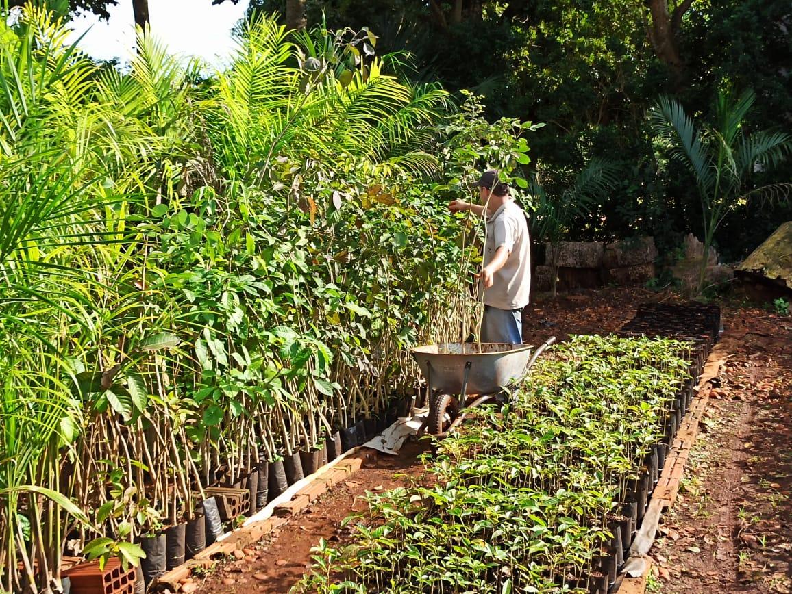 Imam apresenta resultados de 2019 e anuncia  investimentos de R$ 400 mil em arborização para 2020