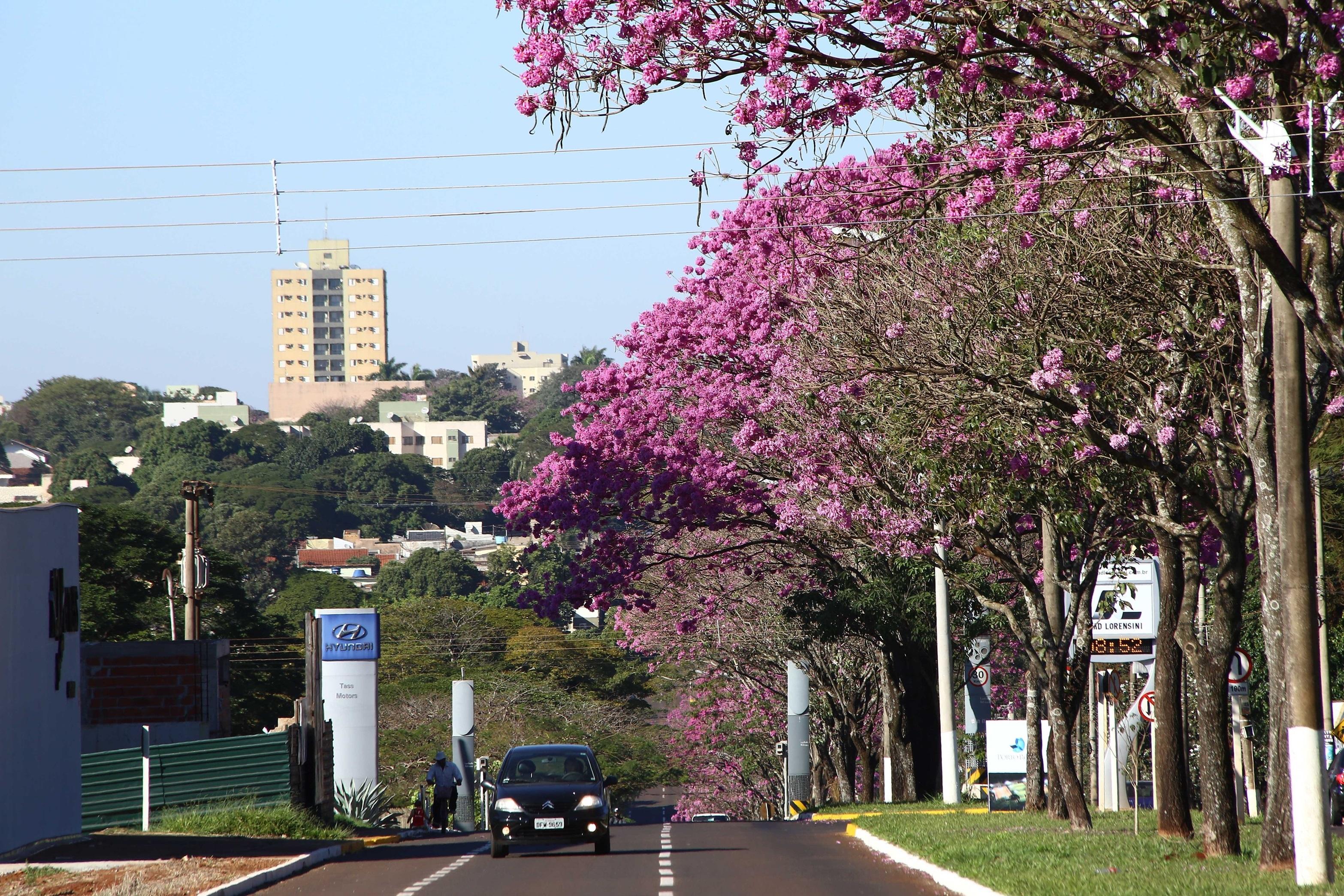 Diretrizes do Plano de Arborização Urbana de Dourados serão apresentadas em reunião pública virtual, na quinta